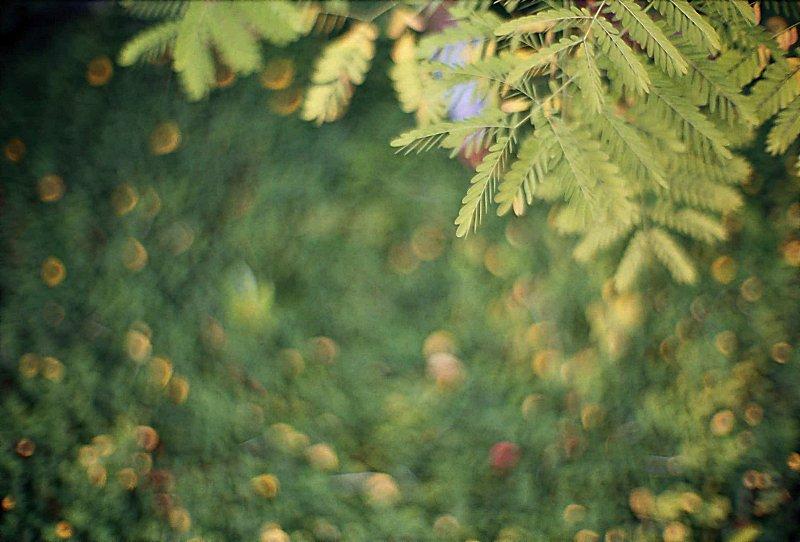 Canon 50mm f 0.95 sample image