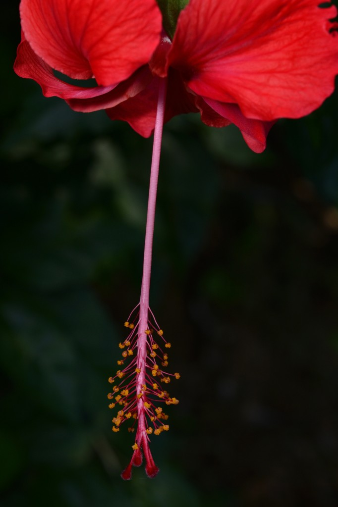 1/100 sec, f/11, 60mm, ISO 400, with AF-S  Micro NIKKOR 60mm f/2.8G ED