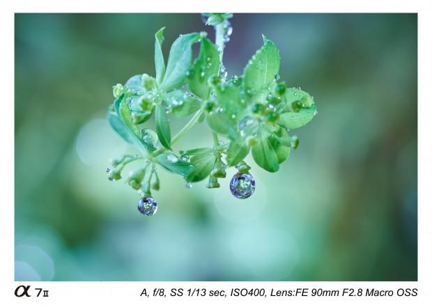 Sony FE 90mm f 2.8 macro lens 8