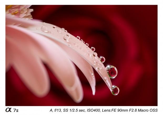 Sony FE 90mm f 2.8 macro lens 9