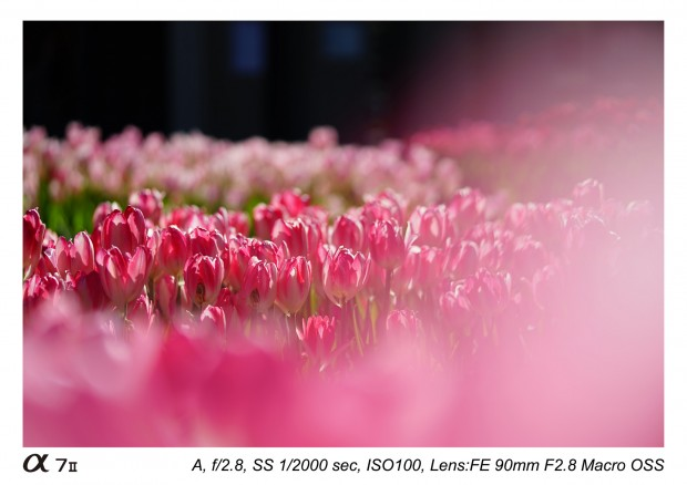 Sony FE 90mm f 2,8 macro lens 10