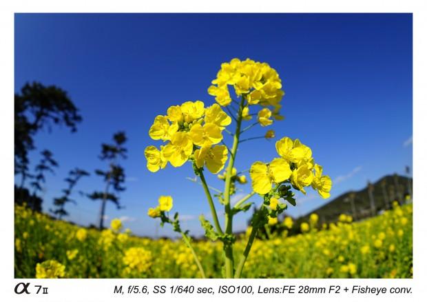 sony fe 28mm f2 lens sample images 3