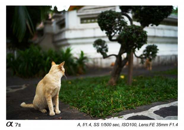 sony zeiss fe 35mm f 1.4 za lens sample images